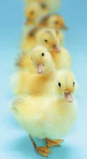 Readying for an IPO? Make sure to get all your ducks in a row!